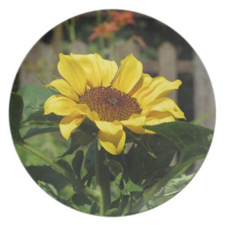Single yellow sunflower with green leaves plate