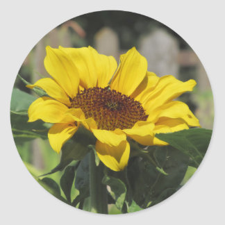 Single yellow sunflower with green leaves round sticker