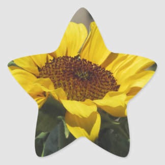 Single yellow sunflower with green leaves star sticker