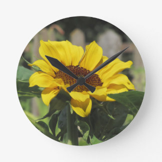 Single yellow sunflower with green leaves wallclock