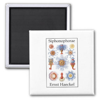 Siphonophorae by Ernst Haeckel Square Magnet
