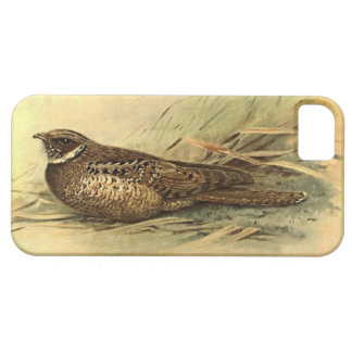 Siphonorhis Americana iPhone 5 Barely There Case iPhone 5 Cover
