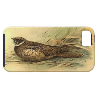 Siphonorhis Americana Vibe iPhone 5 Case