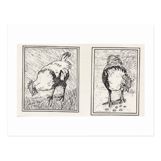Sir Lancelot The Regal Rooster Postcards