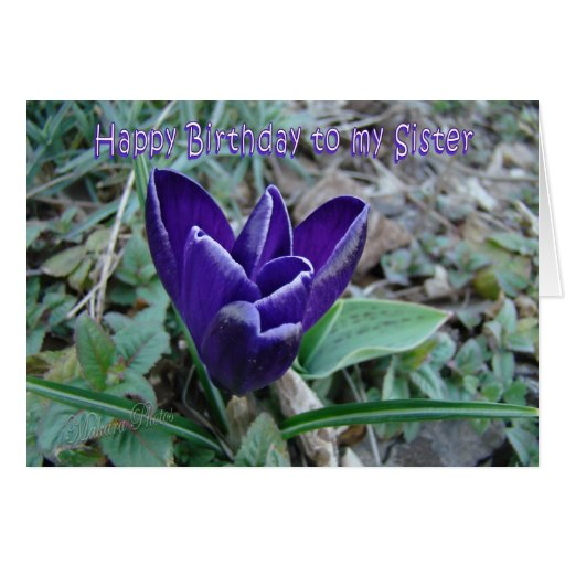Sister Bday Crocus Cards