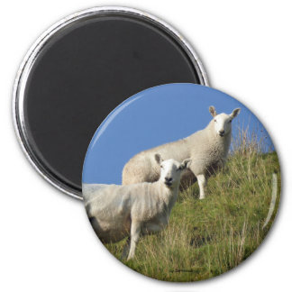 Sister Sheep Magnet