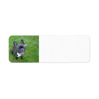 sitting 2 french bulldog return address label