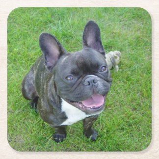 sitting 2 french bulldog square paper coaster