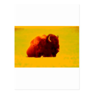Sitting Bison Postcard