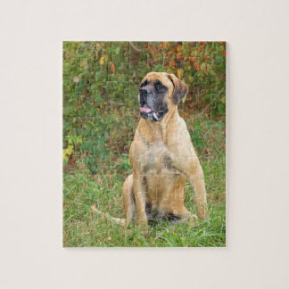 Sitting English Mastiff dog puzzle