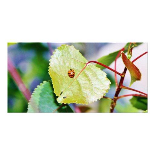 Sitting Ladybug on a Leaf Customized Photo Card