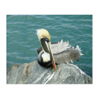 Sitting Pelican Acrylic Wall Art