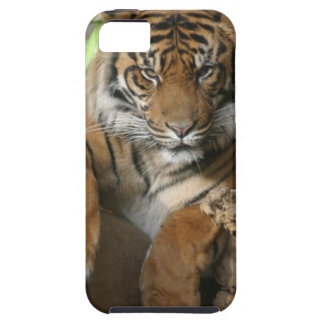 Sitting Pretty iPhone 5 Cover