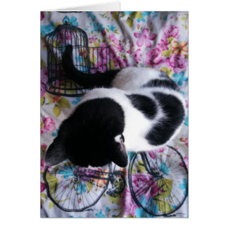 Sitting Pretty Kitty Notecard