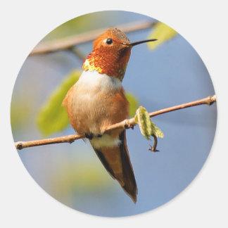Sitting Pretty: Male Rufous Hummingbird Round Sticker