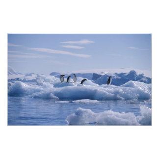 Six Adelie Penguins Pygoscelis adeliae) on an Photograph