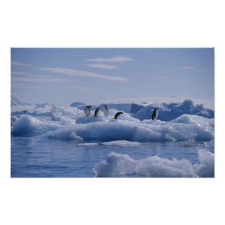 Six Adelie Penguins Pygoscelis adeliae) on an Poster