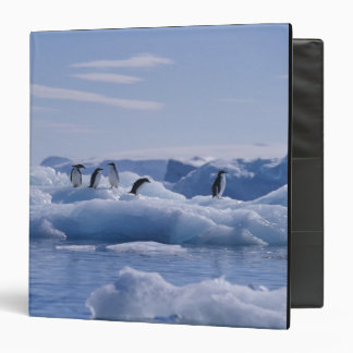 Six Adelie Penguins Pygoscelis adeliae) on an Vinyl Binders