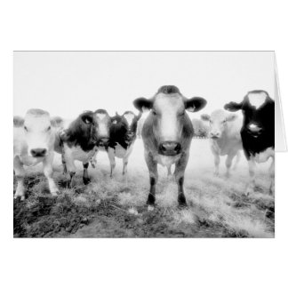 Six Cows Greeting Cards