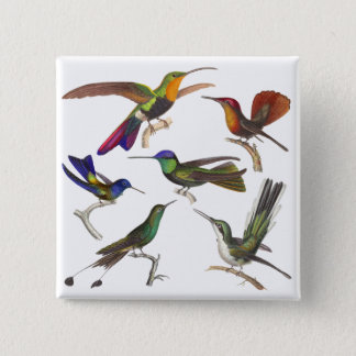 Six Different Hummingbirds - Rene Primevere Lesson 2 Inch Square Button