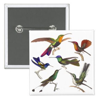 Six Different Hummingbirds - Rene Primevere Lesson 2 Inch Square Button