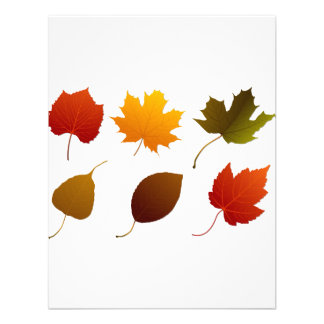 six fall colour leaves nature image graphic png announcements