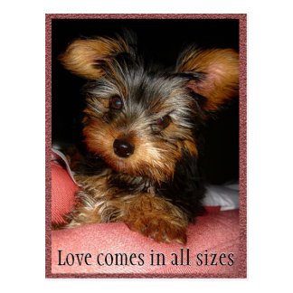 Size of Love Yorkie Postcard