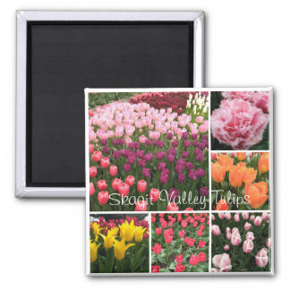 Skagit Valley, WA tulips magnet
