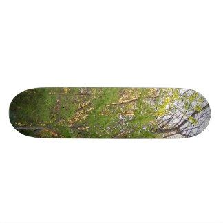 Skate in Nature Skate Board Decks