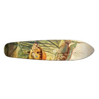 skateboard - aquarium fish- Aequidens Curviceps
