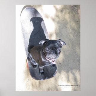 Skateboarding Pug (Photo) Print