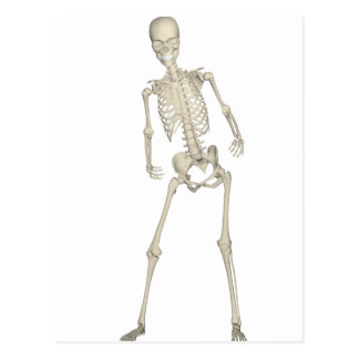 Skeleton #7 postcard