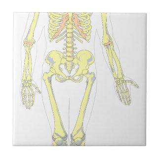 Skeleton Tile