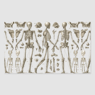 Skeletons from the Brockhaus & Efron Encyclopedia Sticker