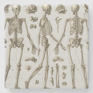 Skeletons from the Brockhaus & Efron Encyclopedic Stone Coaster