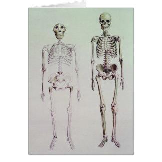 Skeletons of Australopithecus Boisei Greeting Card