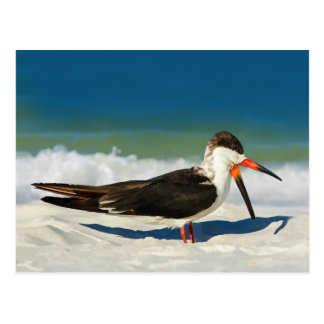 Skimmer Bird at the Beach  Postcard