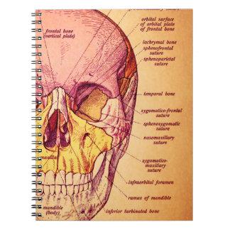 Skull anatomy notebook