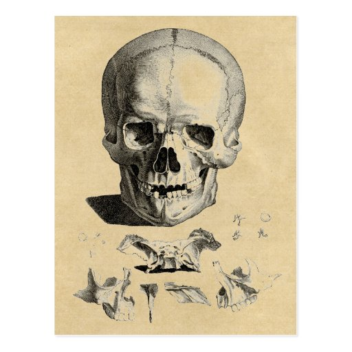 Skull and Jaw Bones Postcard