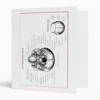 Skull details above and below binder