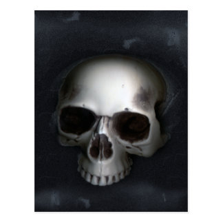 Skull Lower Jaw Removed Postcards