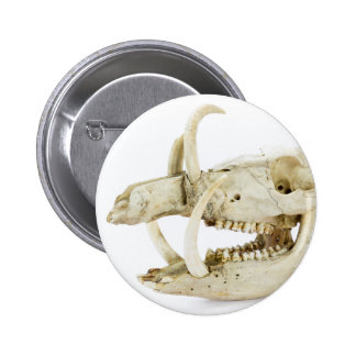Skull of wild boar 2 inch round button