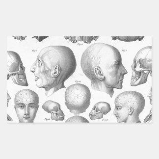 Skull Types Sticker
