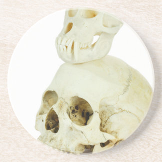 Skulls of human and ape on top drink coasters