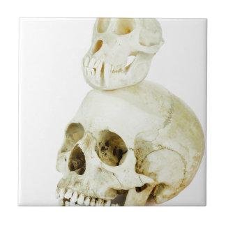 Skulls of human and ape on top tiles
