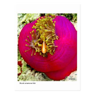 Skunk Anemone fish postcard