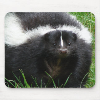 Skunk Photo Mouse Pad