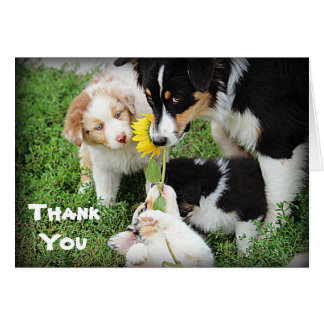 Sky Blue Aussies Thank You Card