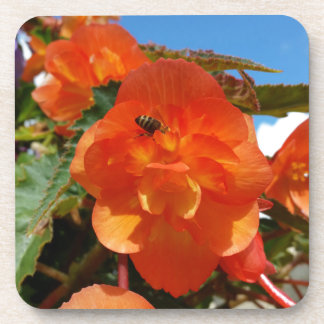 sky, flowers and bee coaster