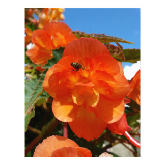 sky, flowers and bee letterhead